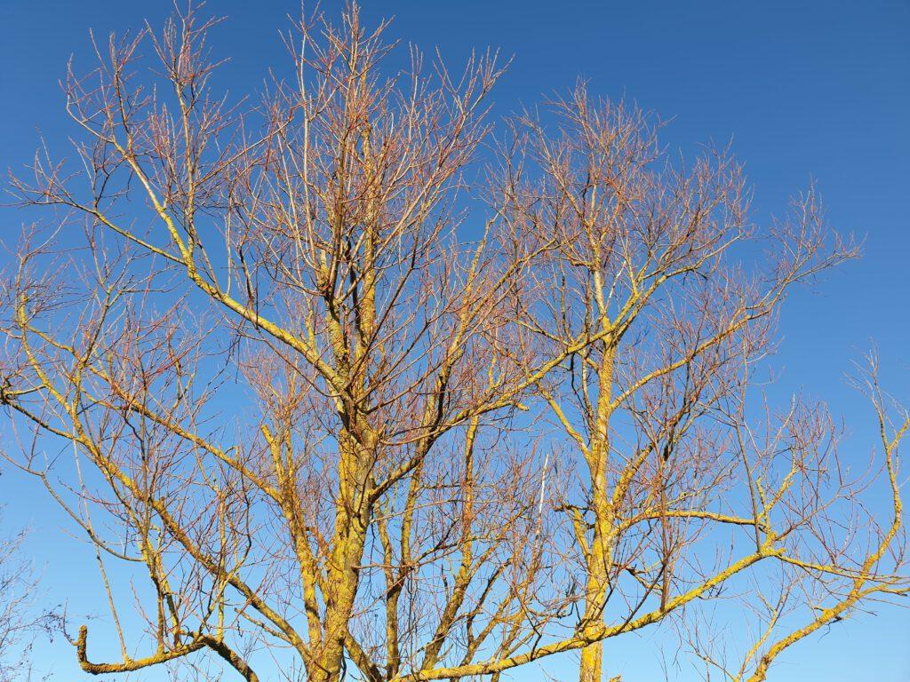 Ein Baum wie eine Nervenzelle